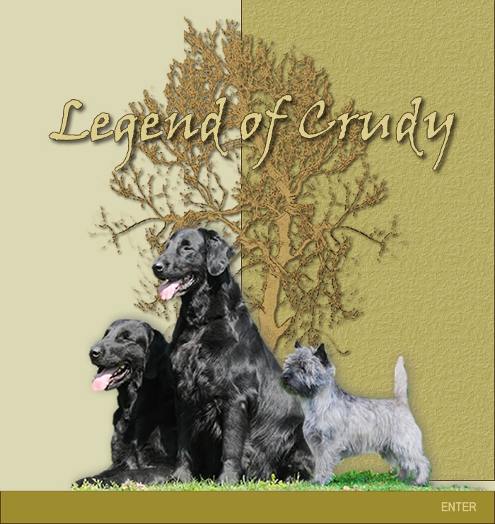 Allevamento Cairn Terrier e Flat Coated Retriever Legend of Crudy